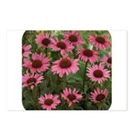 Echinacea Magnus Postcards (Package of 8)
