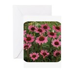 Echinacea Magnus Greeting Cards (Pk of 20)