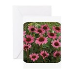 Echinacea Magnus Greeting Card