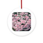 Phlox Candy Stripe Ornament (Round)