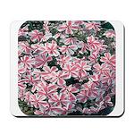 Phlox Candy Stripe Mousepad
