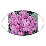 Phlox Lilac Oval Sticker