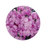 Phlox Lilac 3.5