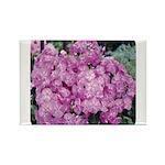 Phlox Lilac Rectangle Magnet