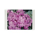 Phlox Lilac Rectangle Magnet (10 pack)