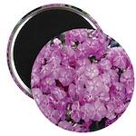 Phlox Lilac Magnet