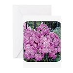 Phlox Lilac Greeting Cards (Pk of 20)