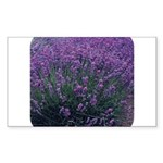 Lavandula - Lavender Rectangle Sticker