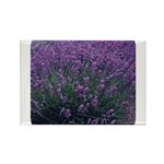 Lavandula - Lavender Rectangle Magnet