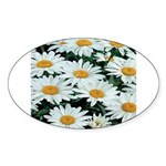 Shasta Daisies Oval Sticker