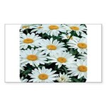 Shasta Daisies Rectangle Sticker