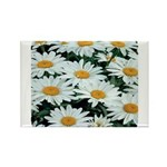 Shasta Daisies Rectangle Magnet