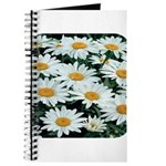 Shasta Daisies Journal