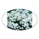 Phlox White Oval Sticker
