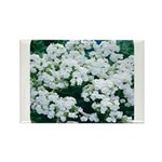 Phlox White Rectangle Magnet