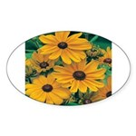 Rudbeckia - Black Eye Susan Oval Sticker