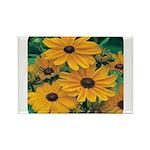 Rudbeckia - Black Eye Susan Rectangle Magnet (100