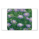 Scabiosa Blue Rectangle Sticker