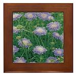 Scabiosa Blue Framed Tile