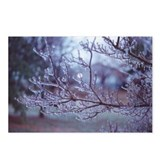 After The Ice Storm Postcards (Package of 8)