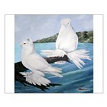 White Trumpeter Pigeons Small Poster