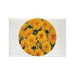 Coreopsis Early Sunrise Rectangle Magnet (100 pack