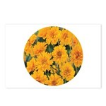 Coreopsis Early Sunrise Postcards (Package of 8)