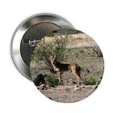 "Coyote 2.25"" Button (10 pack)"