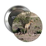 "Cool Coyote 2.25"" Button"