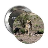"Coyote 2.25"" Button"