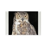 Great Horned Owl Rectangle Magnet (100 pack)