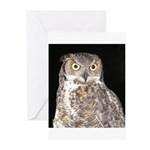 Great Horned Owl Greeting Cards (Pk of 20)