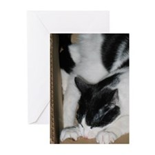 Boxbiting Cat Greeting Cards (Pk of 20)