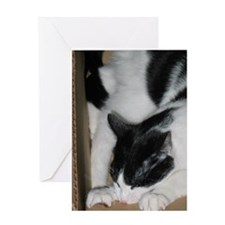 Boxbiting Cat Greeting Card