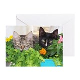 Kittens in Flower Pot Greeting Cards (Pk of 20)
