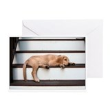 Pooped Puppy Greeting Cards