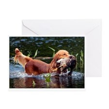 Swimming Toller Greeting Cards