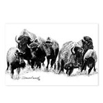 Buffalo Herd Postcards (Package of 8)