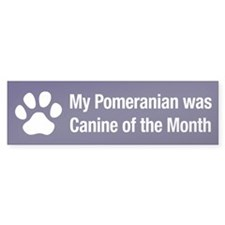 Pomeranian of the Month Bumper Bumper Sticker