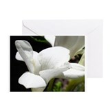 Alabaster Greeting Cards (Pk of 10)
