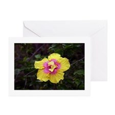Tropical Hibiscus Greeting Cards (Pk of 20)