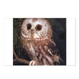Fearful owl Postcards (Package of 8)