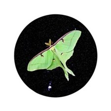 "Luna Moth 3.5"" Button"