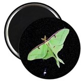 Luna Moth Magnet