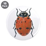 Ladybug 3.5
