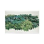 Hosta Clumps Rectangle Magnet (100 pack)