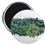 "Hosta Clumps 2.25"" Magnet (100 pack)"