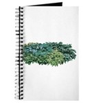 Hosta Clumps Journal
