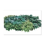 Hosta Clumps Mini Poster Print