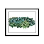 Hosta Clumps Framed Panel Print